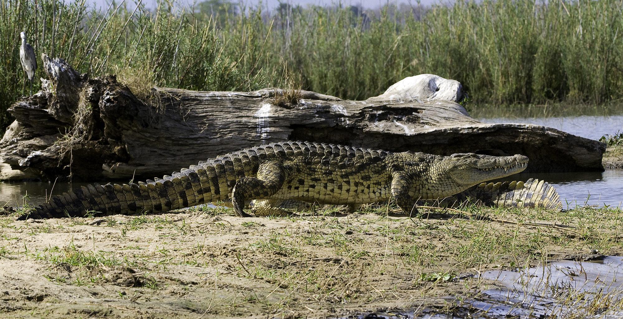 Malawi-Liwonde-National-Park-Wildlife