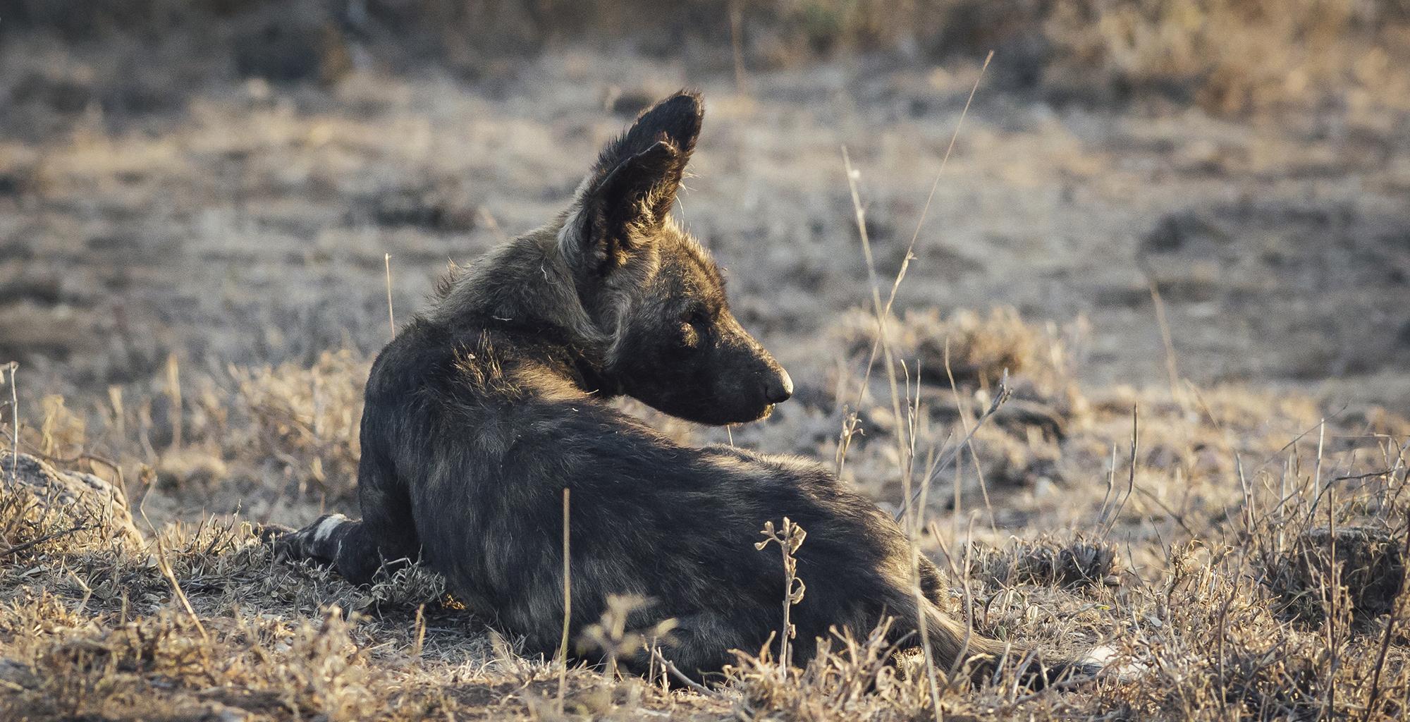 Kenya-Ol-Malo-Lodge-Wildlife