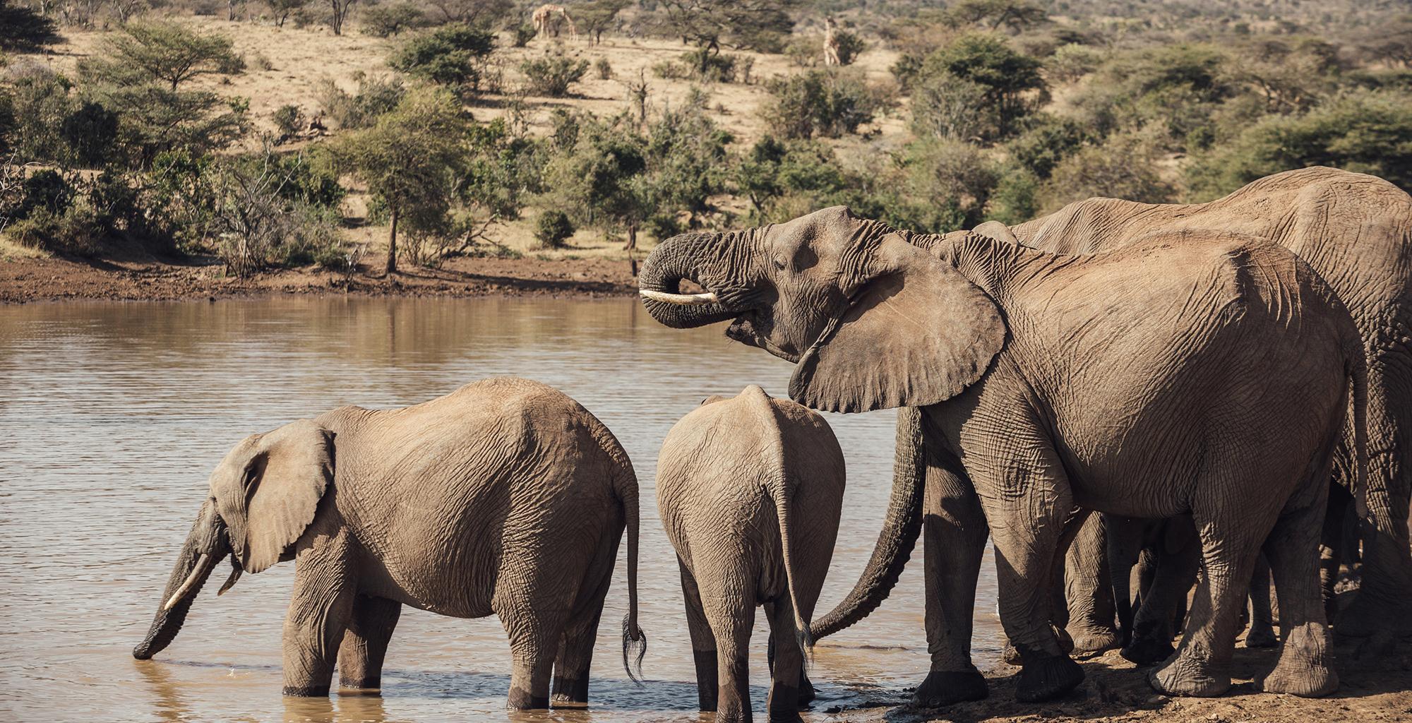 Kenya-Ol-Malo-Lodge-Elephant