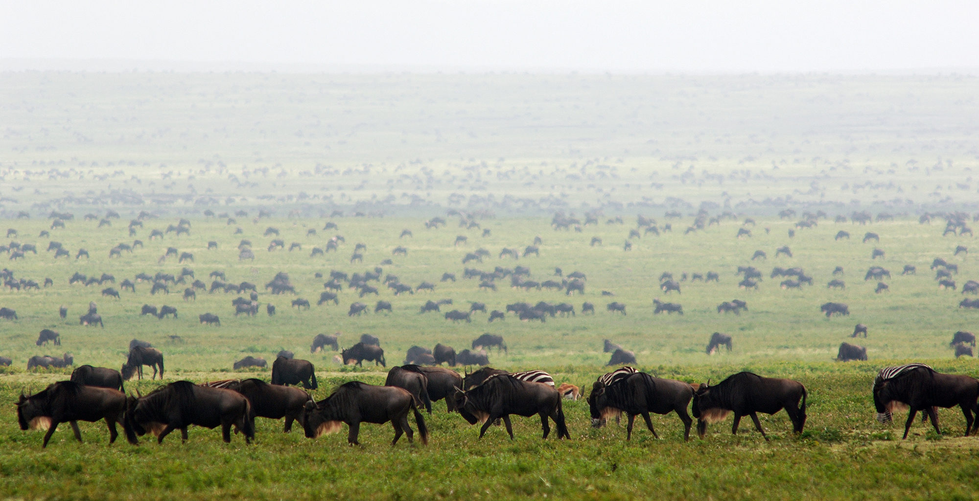 Tanzania-Loliondo-Serengeti-Wildlife-Migration