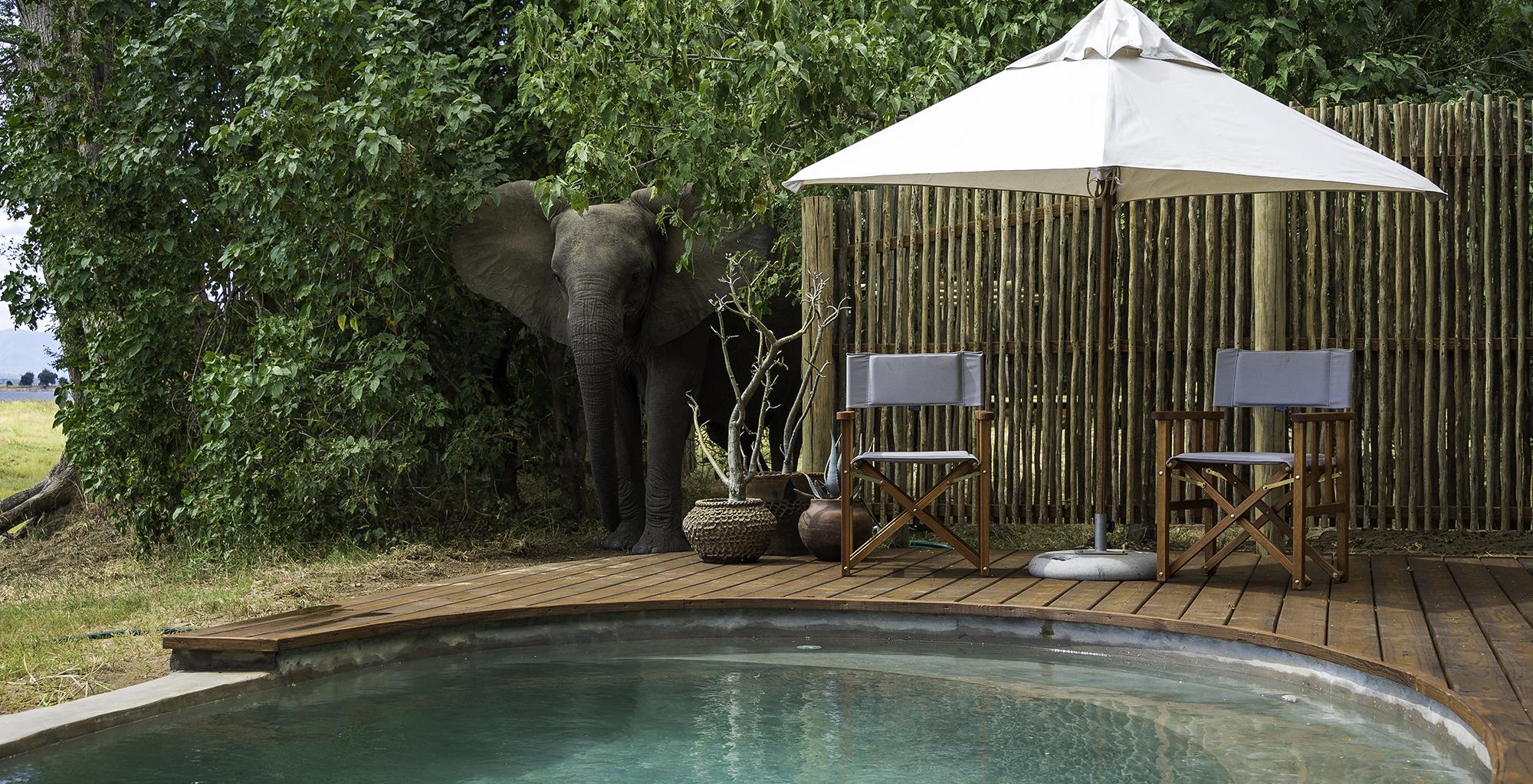 Zimbabwe-Ruckomechi-Pool