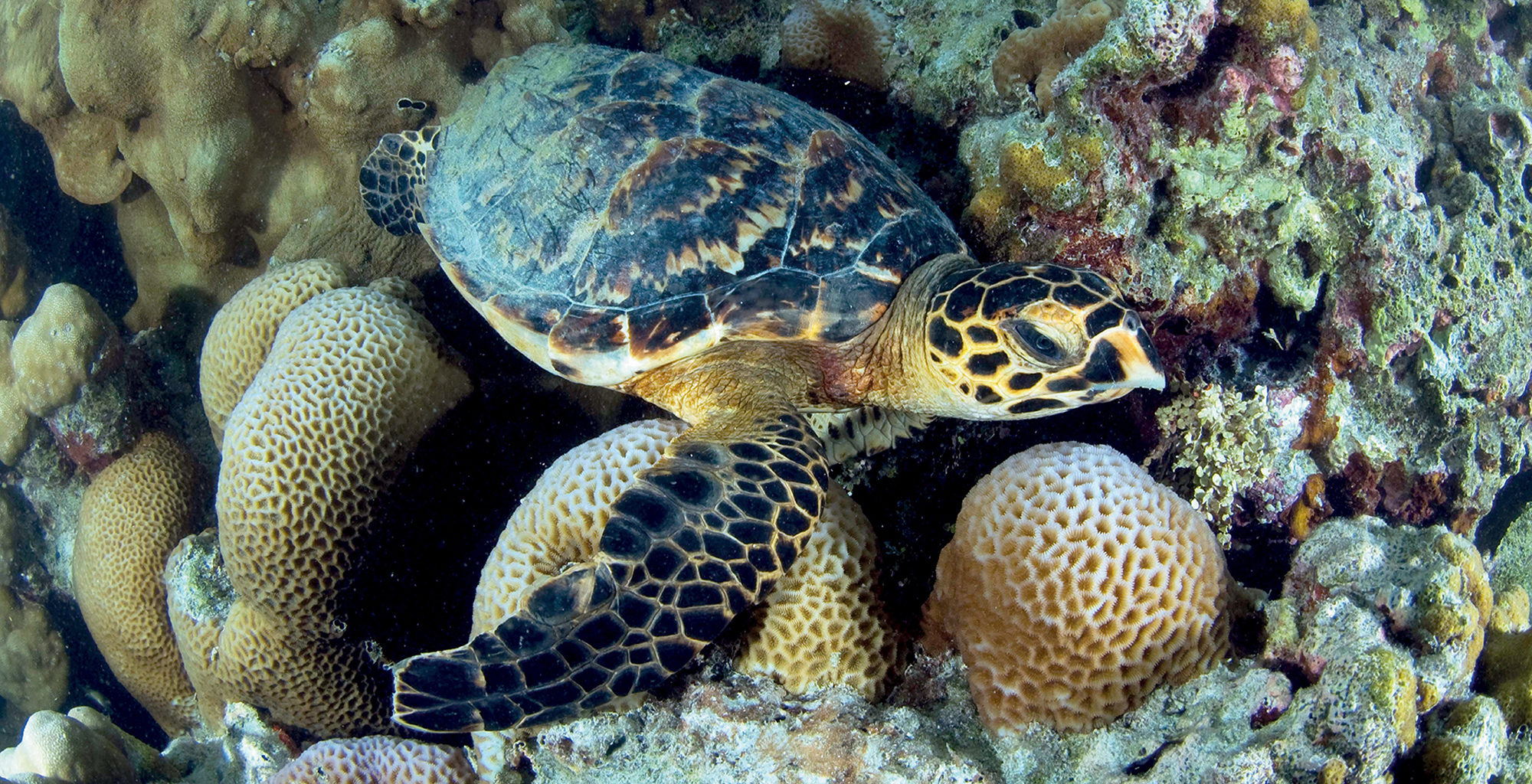 Seychelles-Private-Islands-Turtle