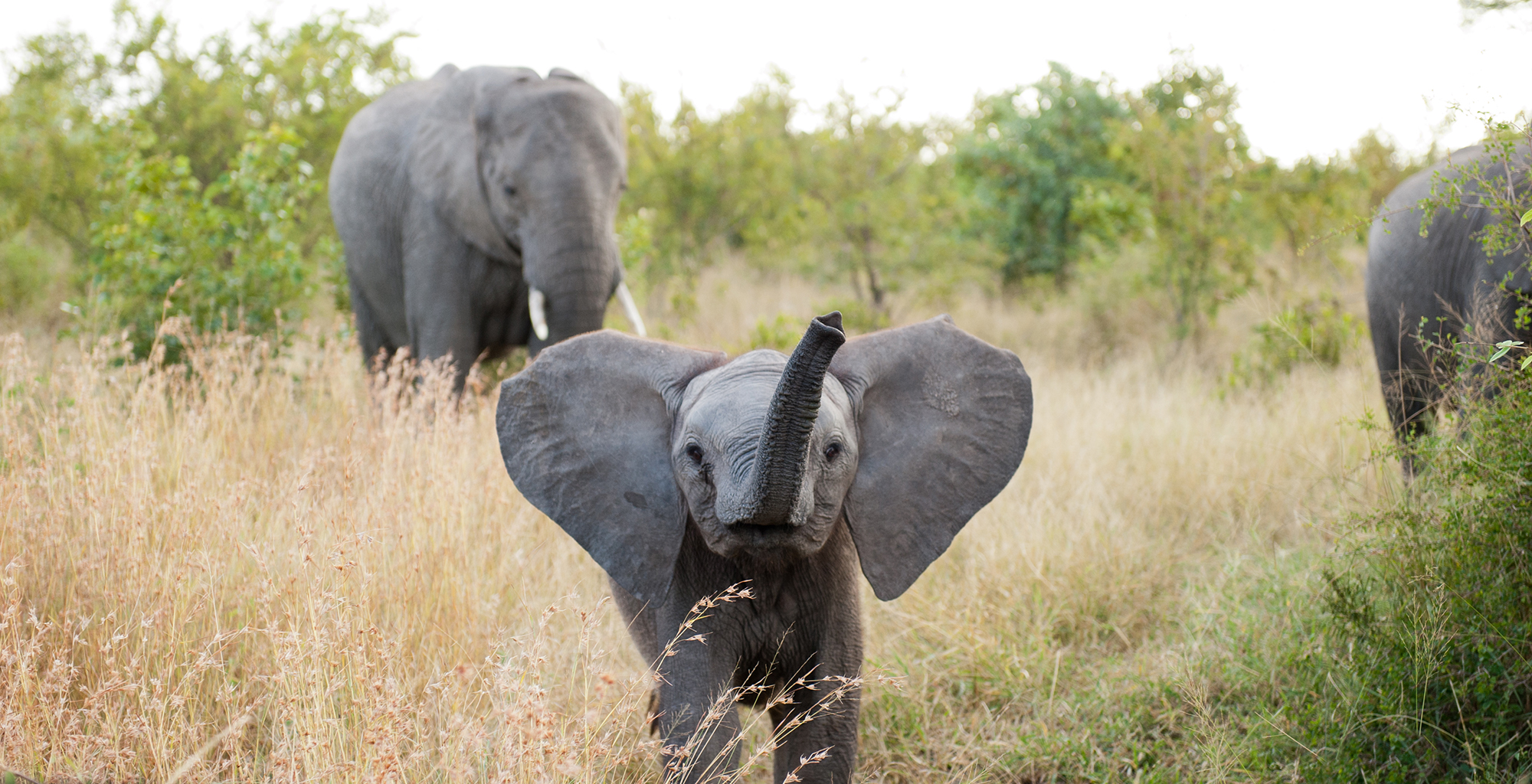 South-Africa-Singita-Boulders-Wildlife-Elephant