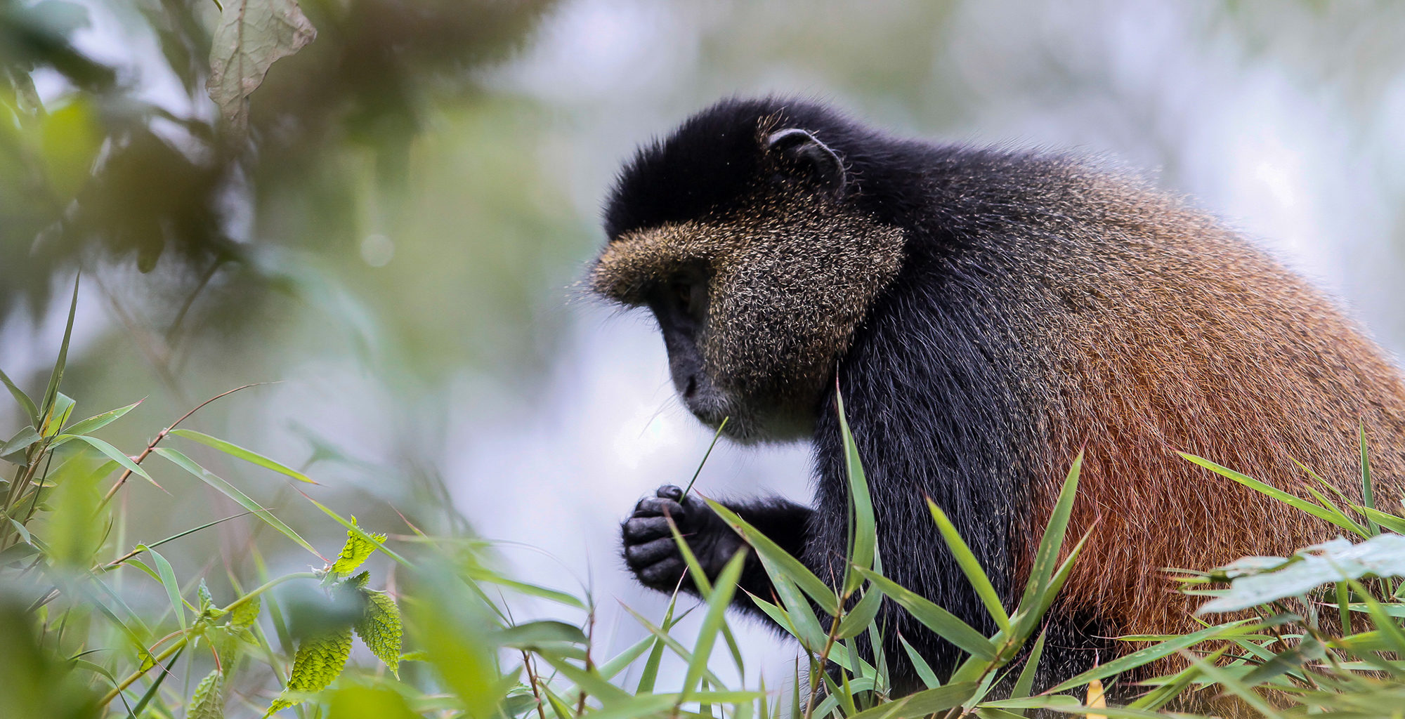 Rwanda-Volcanoes-National-Park-Wildlife