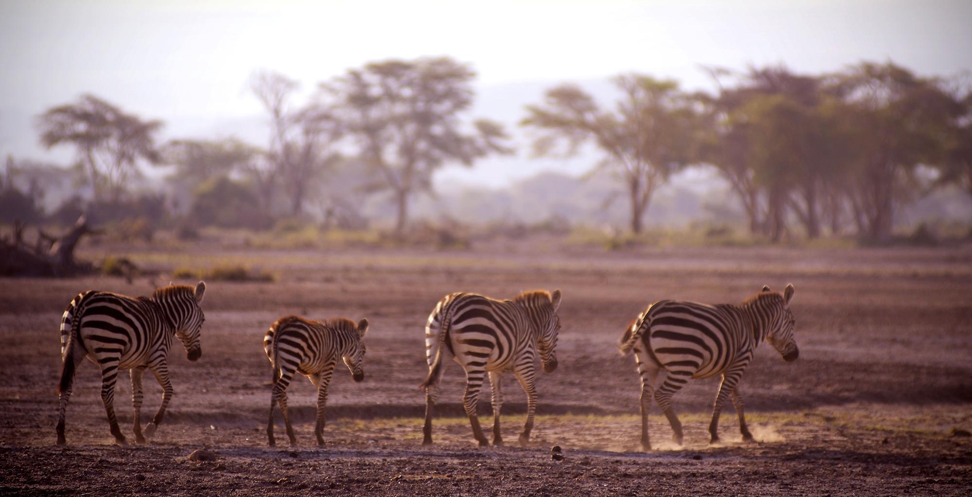 Tanzania-Lake-Manyara-Zebra
