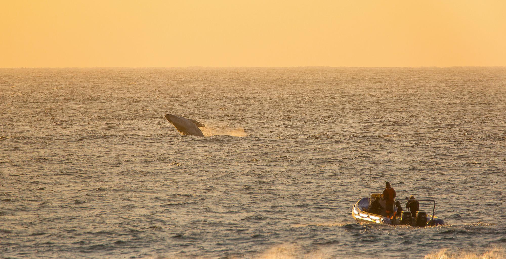 South-Africa-KwaZulu-Natal-Whale