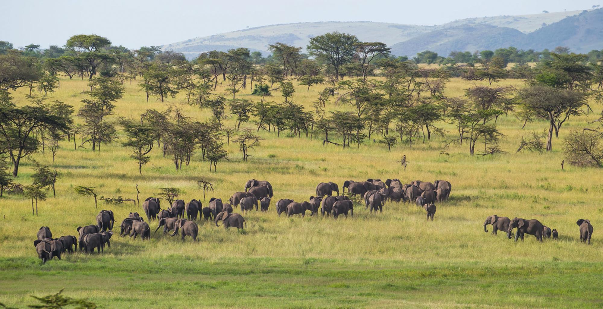 Tanzania-Loliondo-Serengeti-Elephant