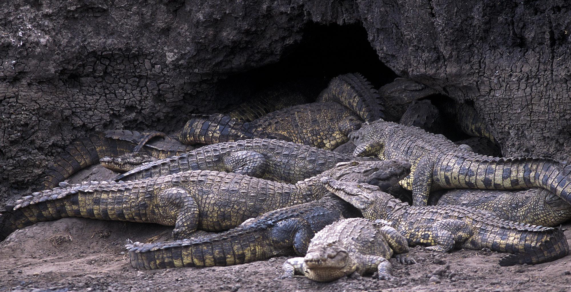 Tanzania-Katavi-Crocodile
