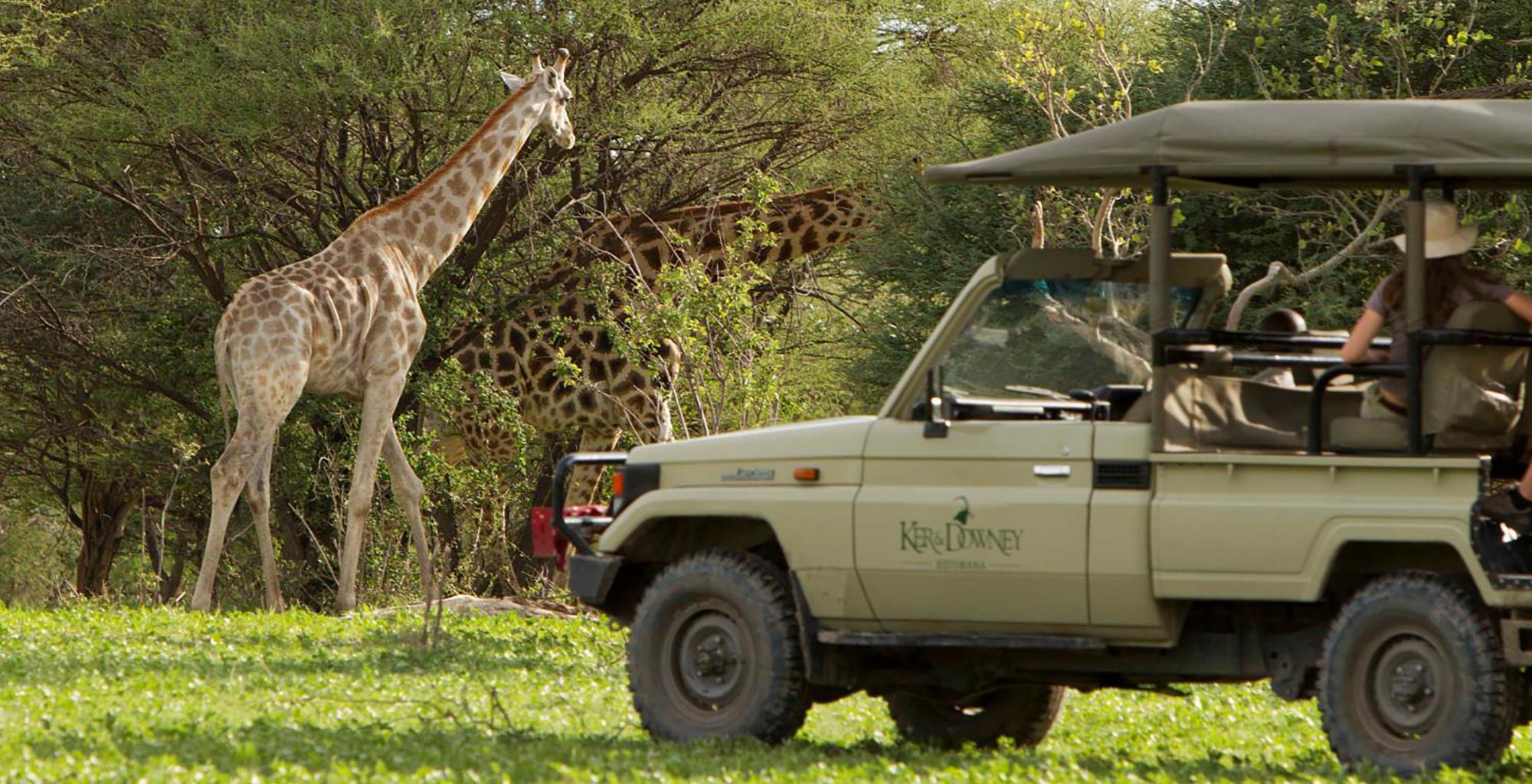 Ker-Downey-Young-Explorers-Giraffe
