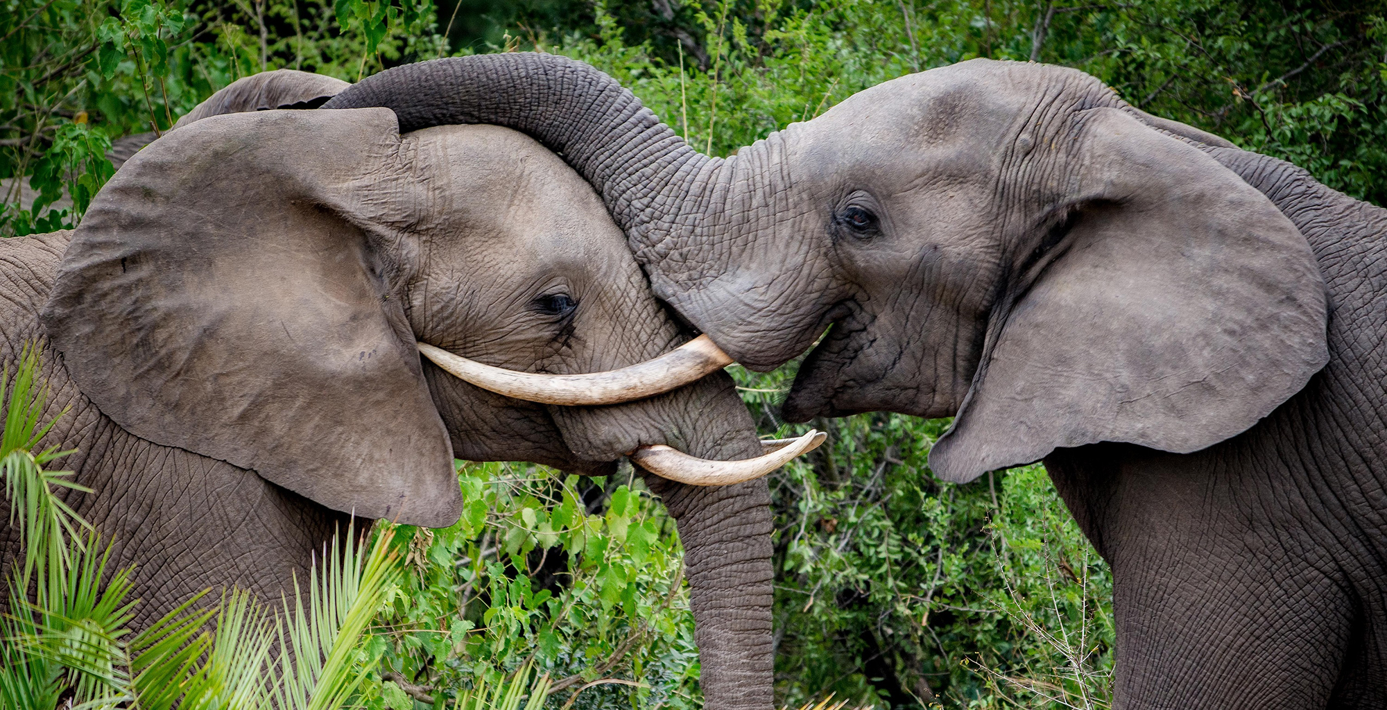 South-Africa-Kruger-National-Park-Elephants