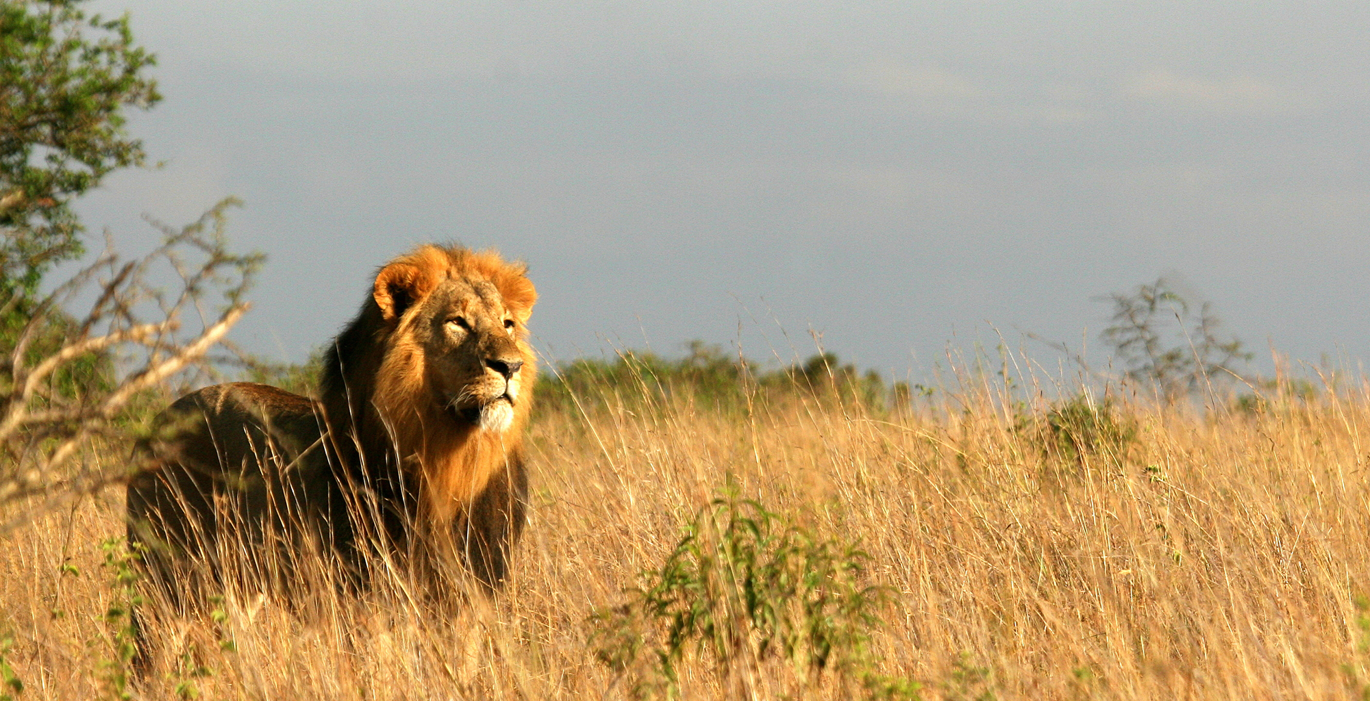 Kenya-Emakoko-Lion