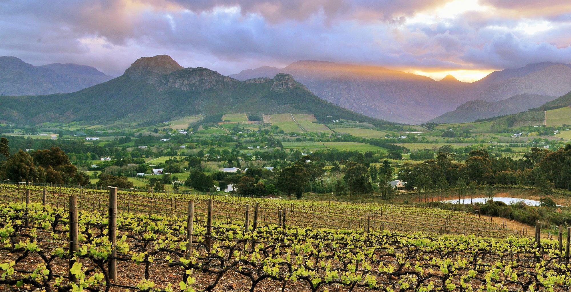 South-Africa-Winelands-Vineyard