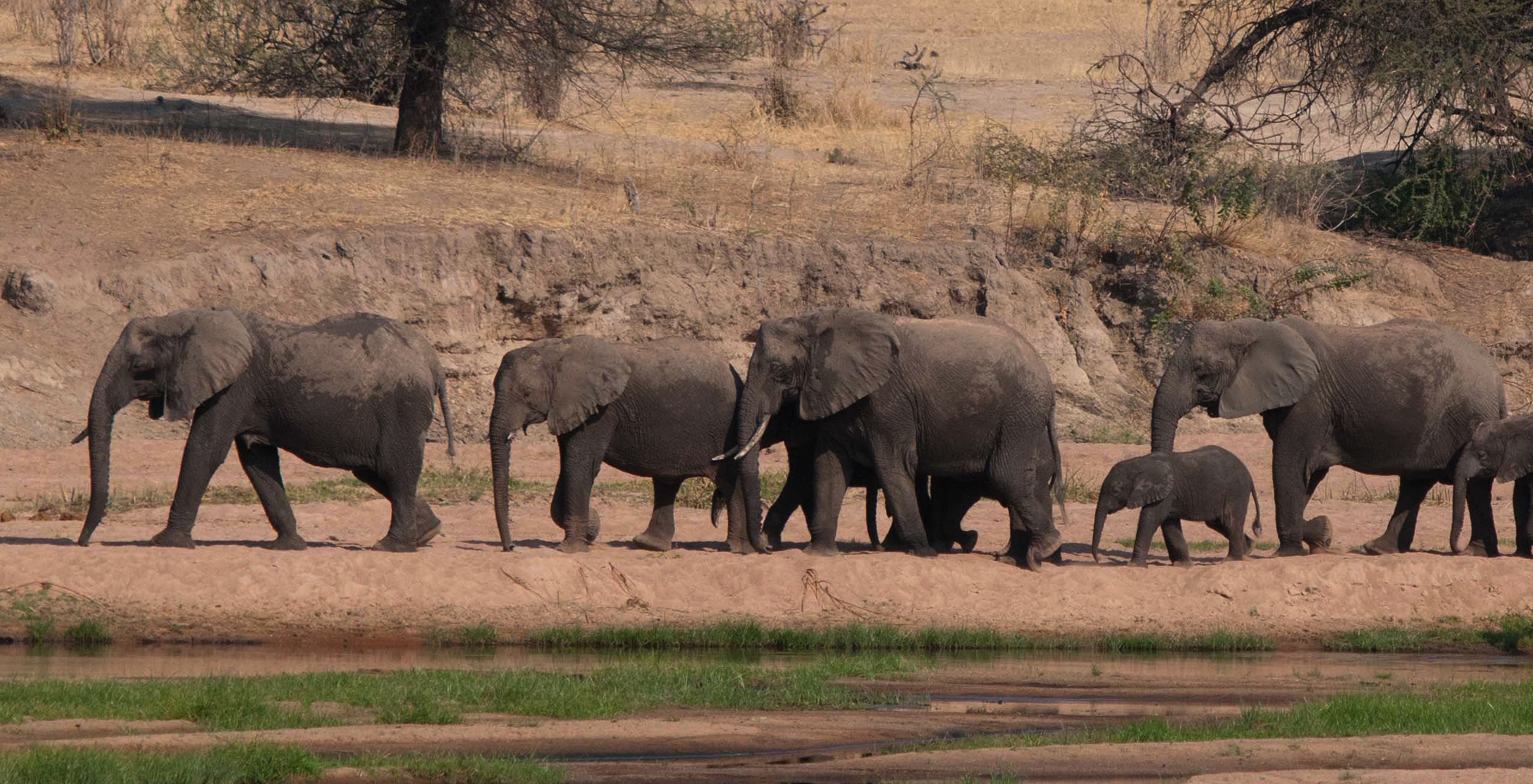 Tanzania-Ruaha-National-Park-Elephants