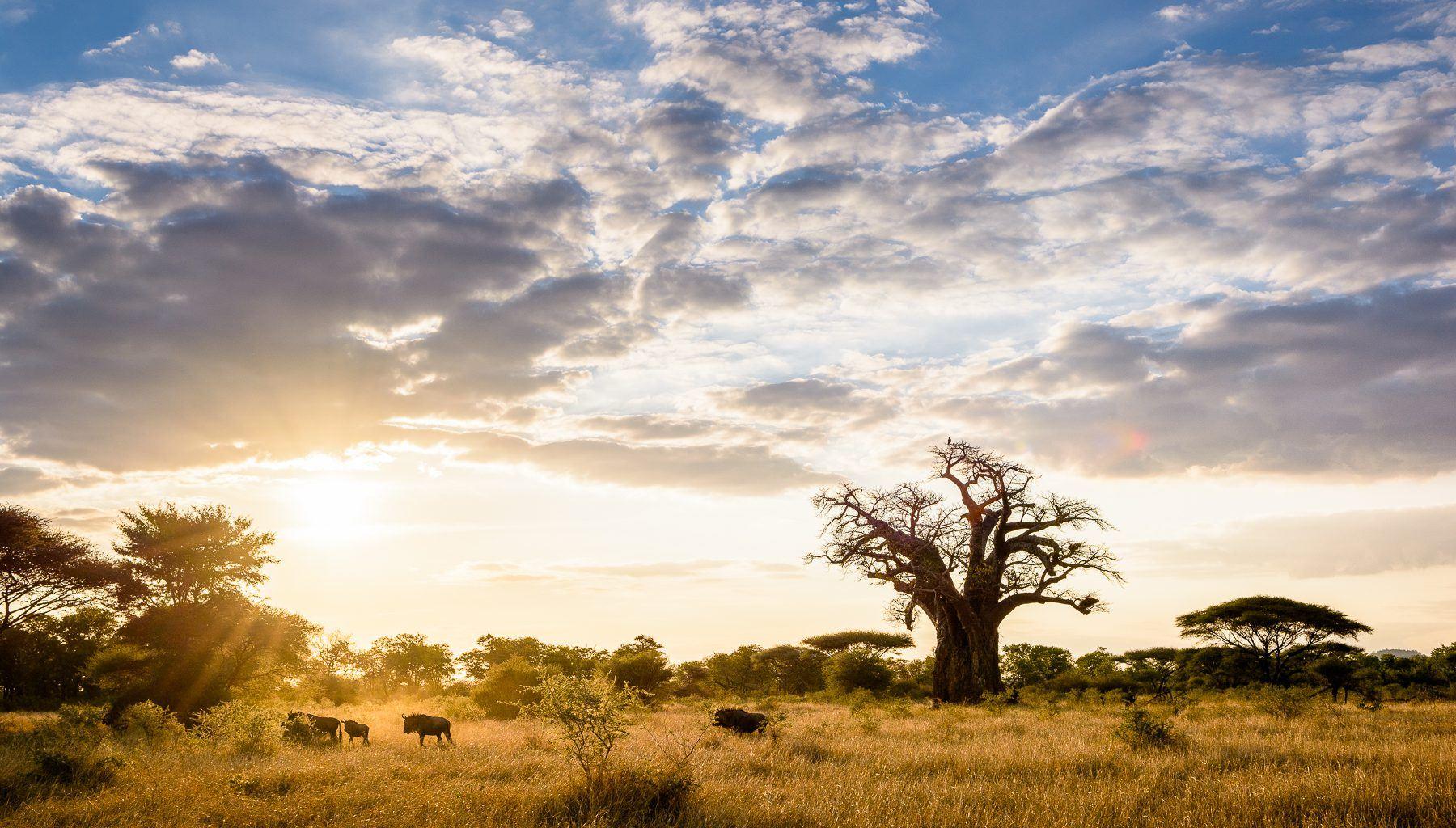 Zimbabwe-Malilangwe-Landscape