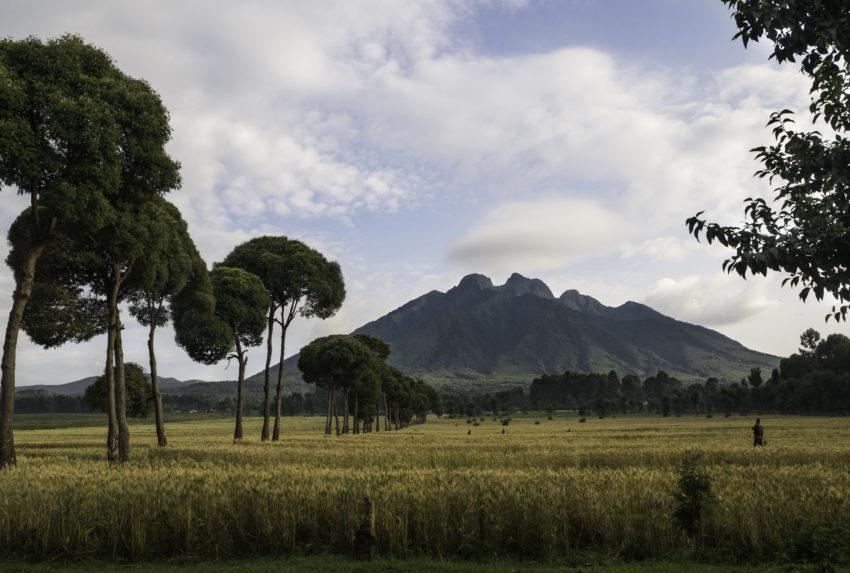 Sabyinyo Silverback Lodge Rwanda View