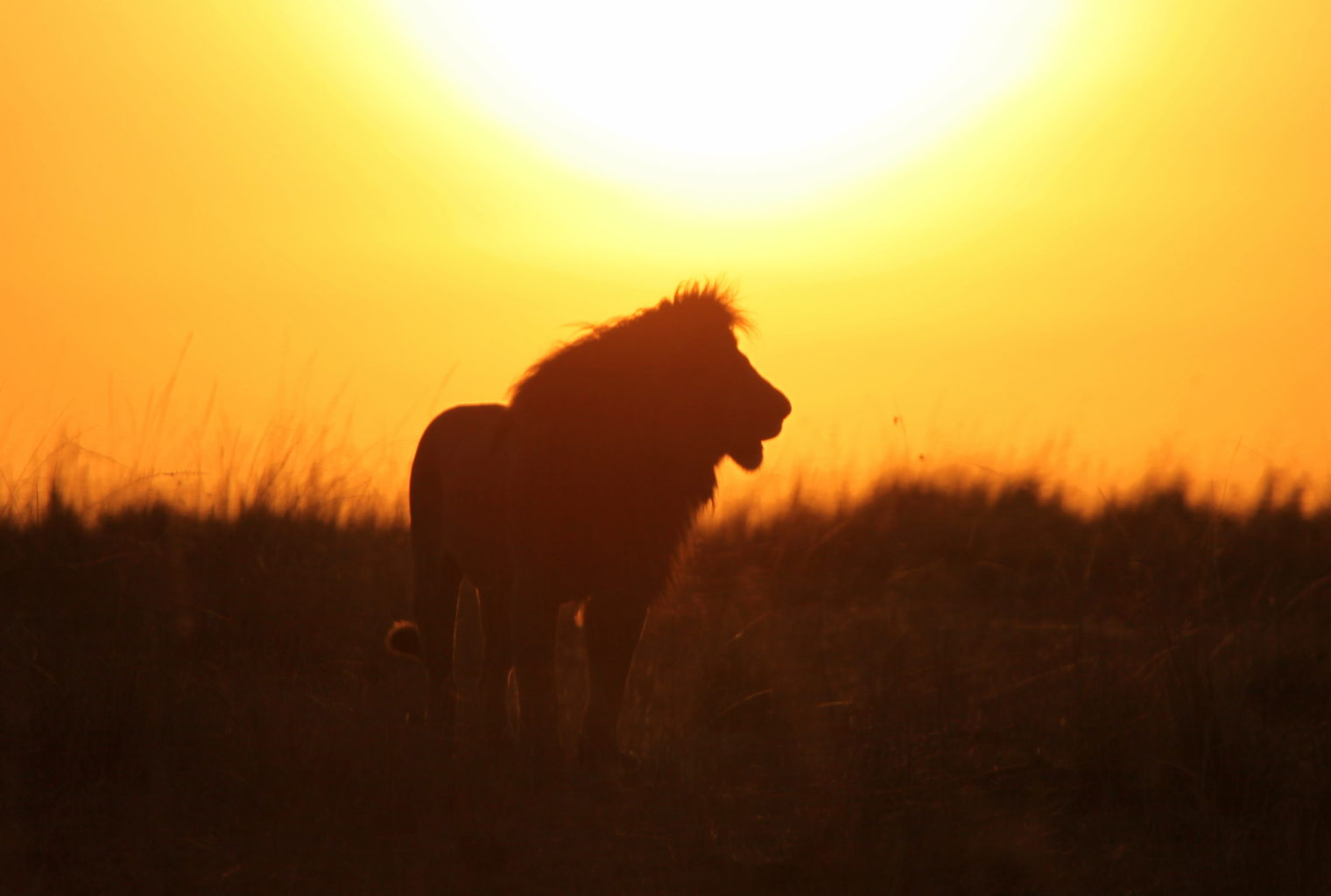 Emakoko Kenya Exterior Lion