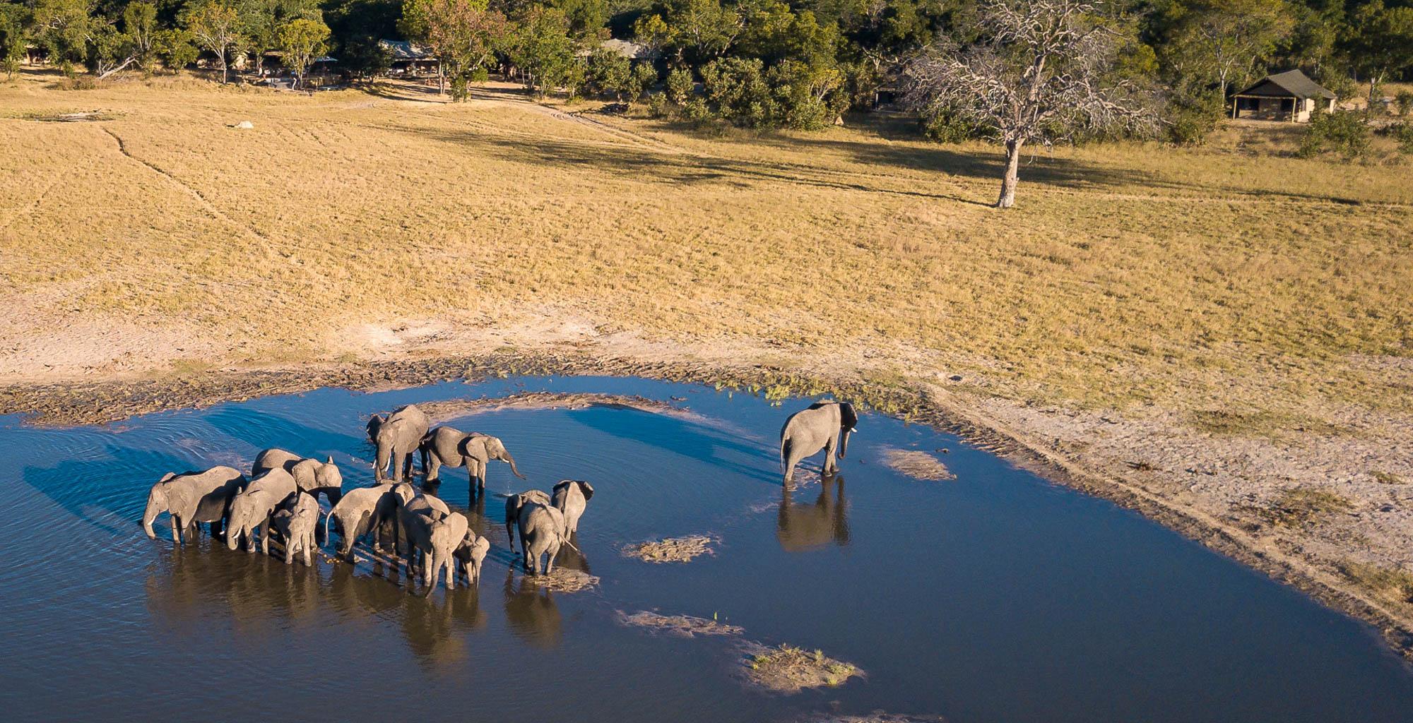 Zimbabwe-Hwange-Wildlife-Elephant