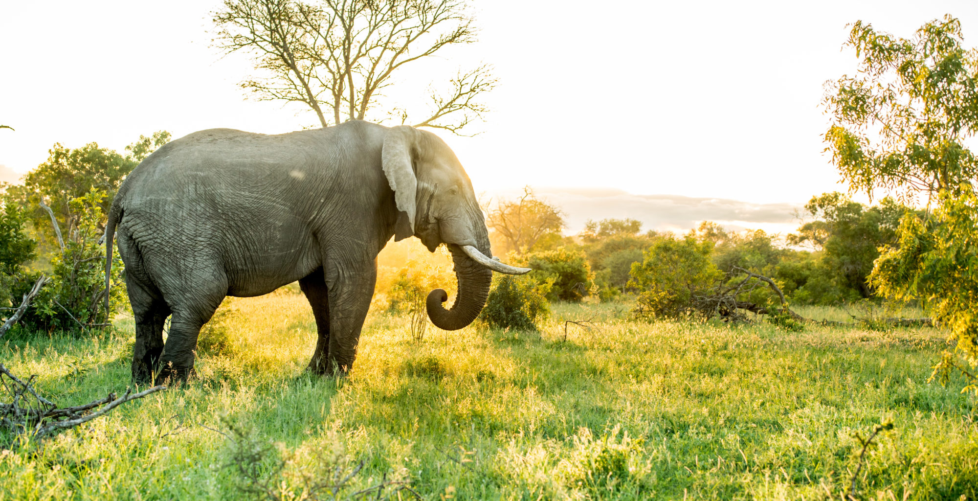 South-Africa-Singita-Ebony-Wildlife-Elephant