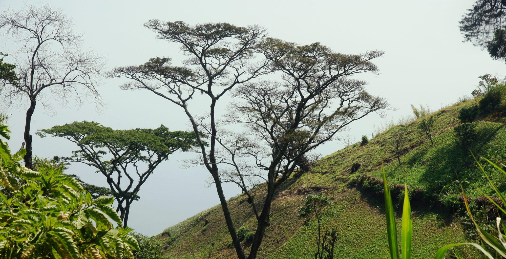 Uganda-Kibale-Landscape
