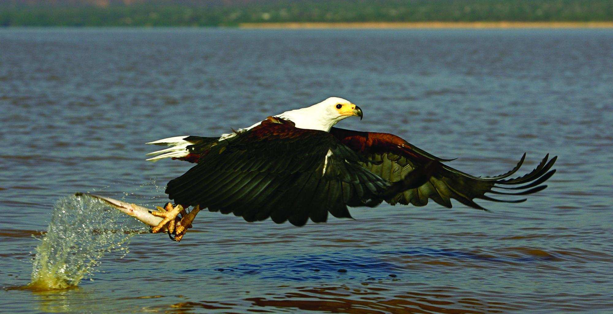 Kenya-Samatian-Island-Lodge-Wildlife