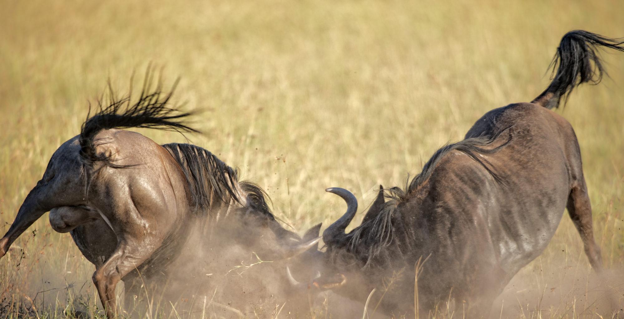 Serengeti Grumeti Area Shot