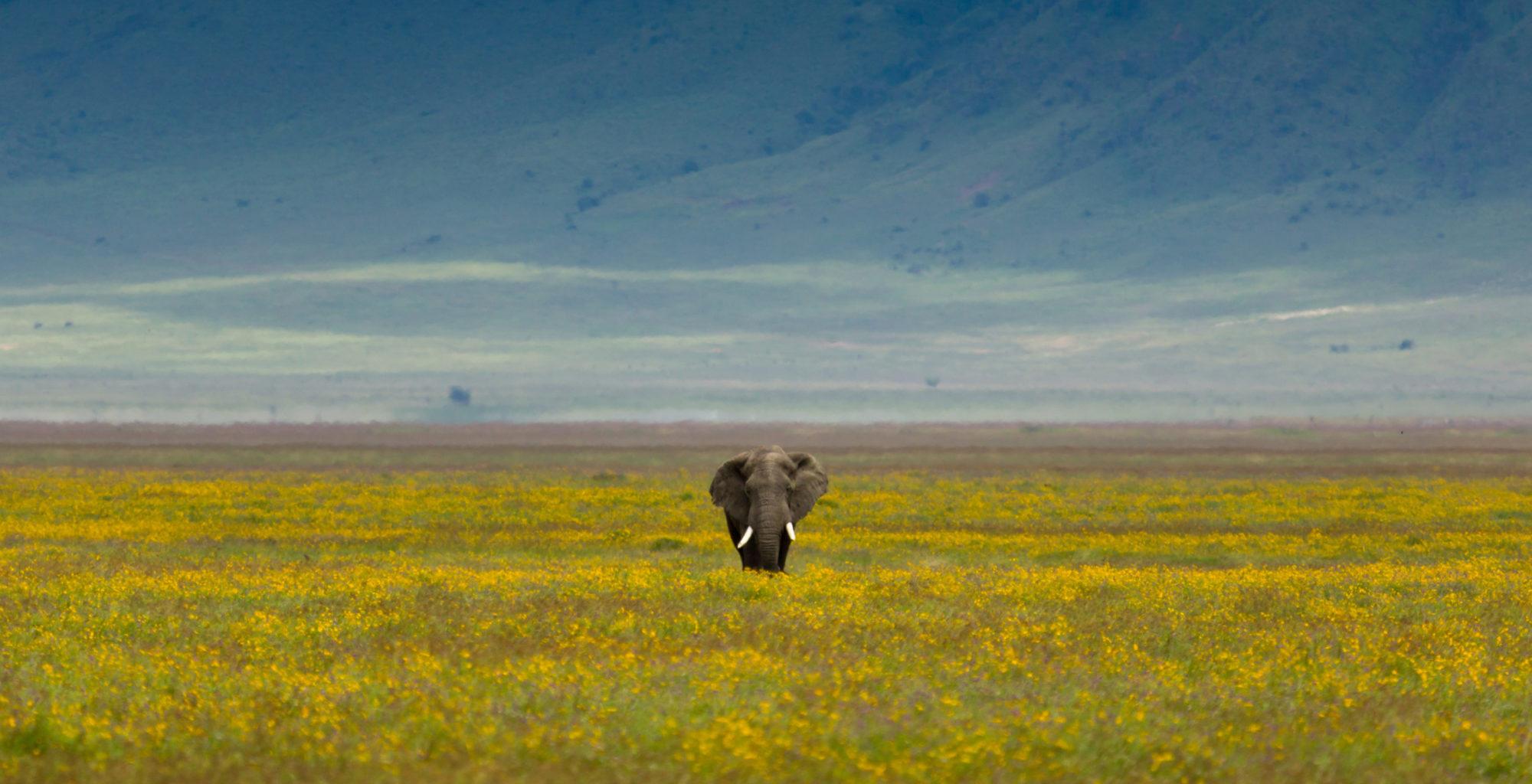 Tanzania-Ngorongoro-Crater-Elephant