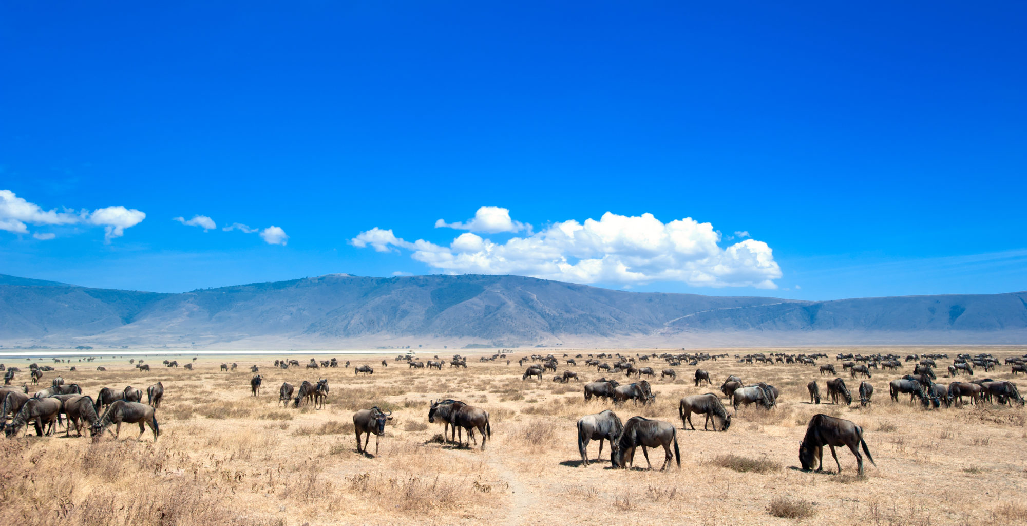 Tanzania-Ngorongoro-Crater-Wildlife