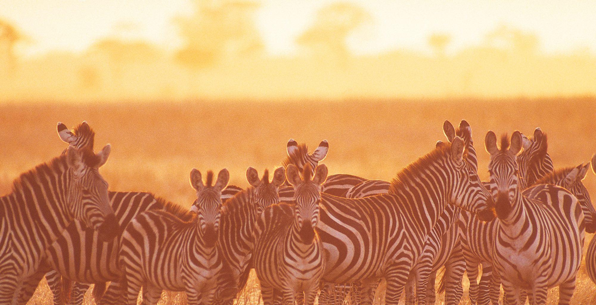 Tanzania-Tarangire-Zebra
