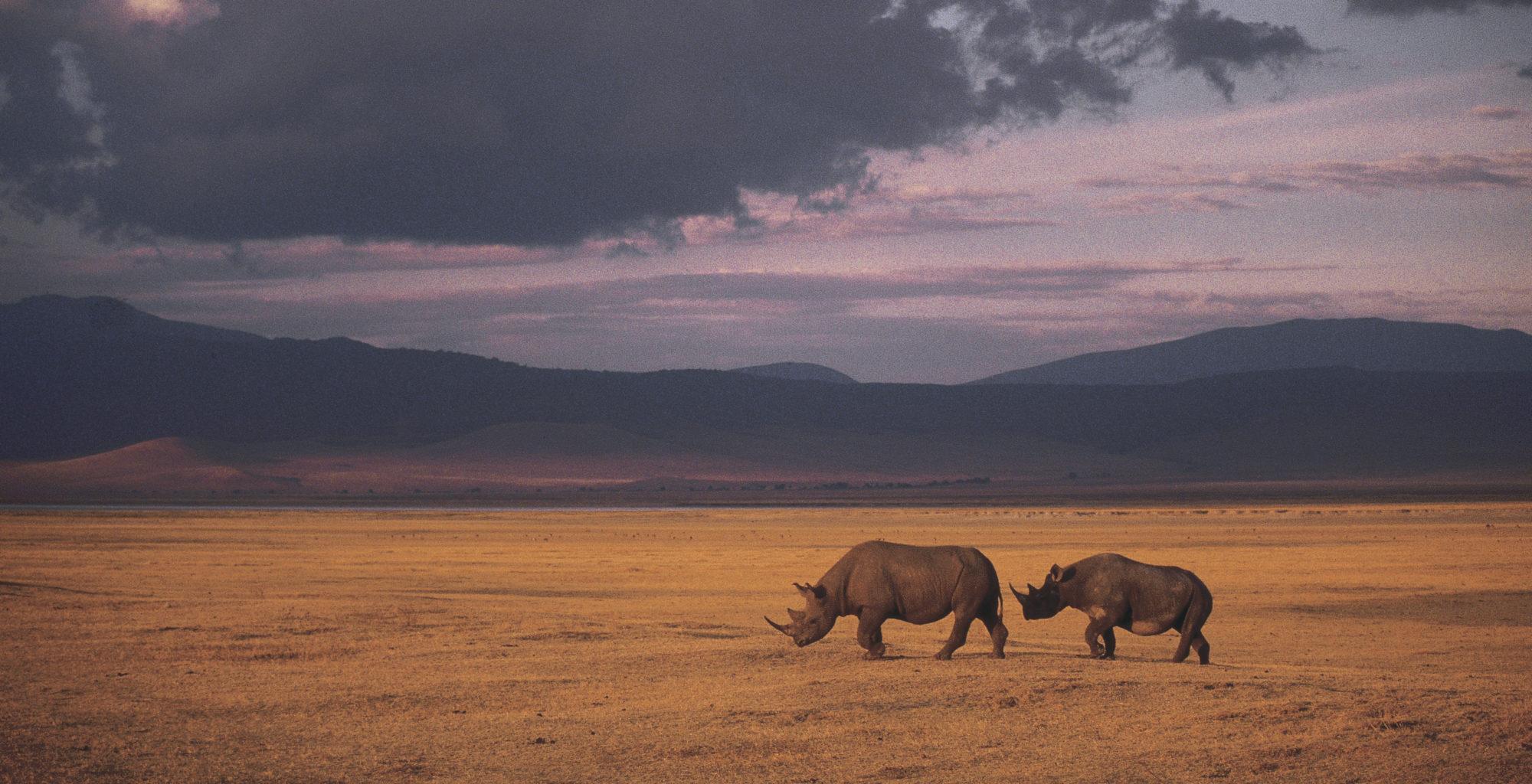 Tanzania-Ngorongoro-Crater-Rhino