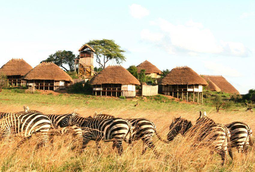 Uganda-Apoka-Lodge-Exterior-Zebra