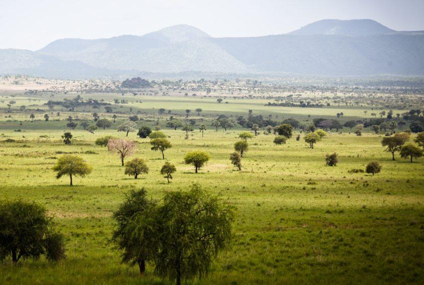 Uganda-Kidepo-Valley-Hero