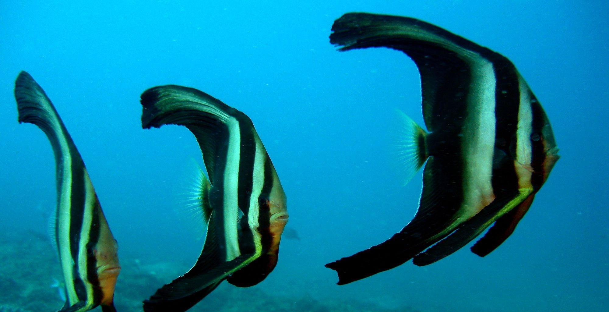 Tanzania-Mainland-Coast-Fish