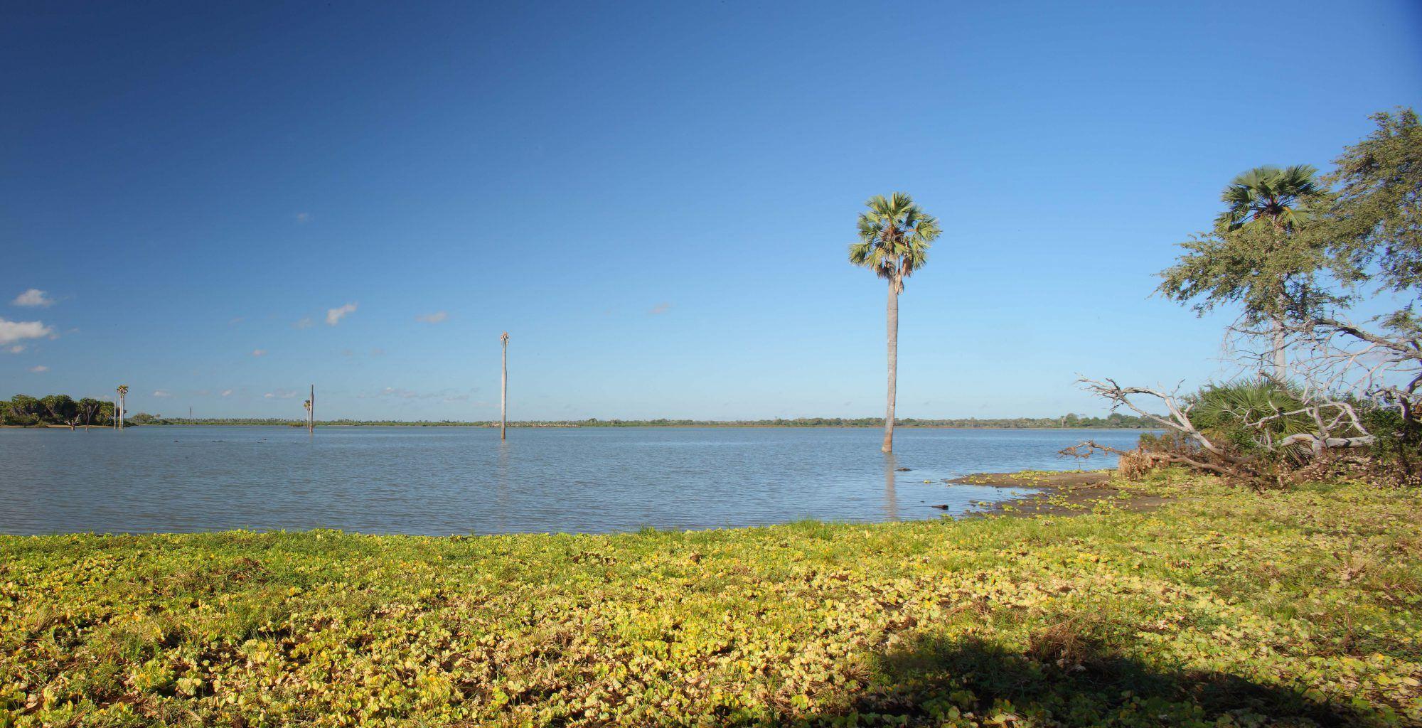 Tanzania-Selous-Game-Reserve-Landscape