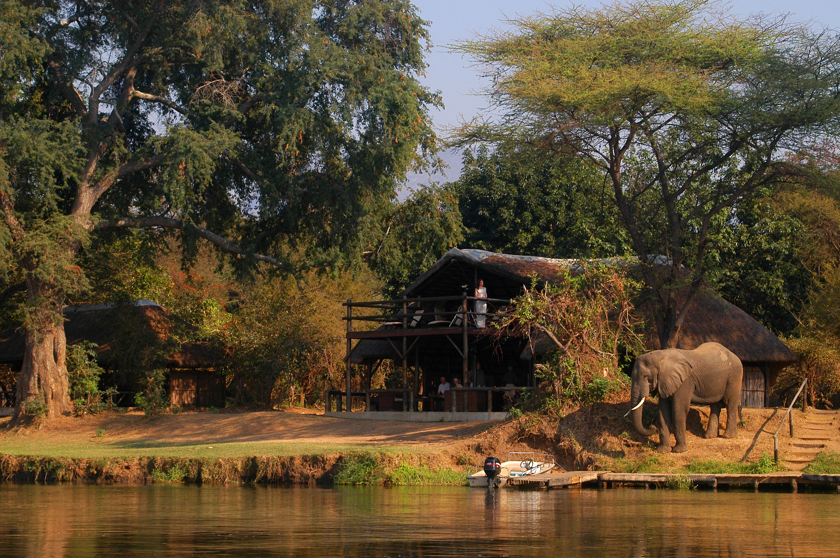 CHIAWA CAMP - Elephant close to the main guest area