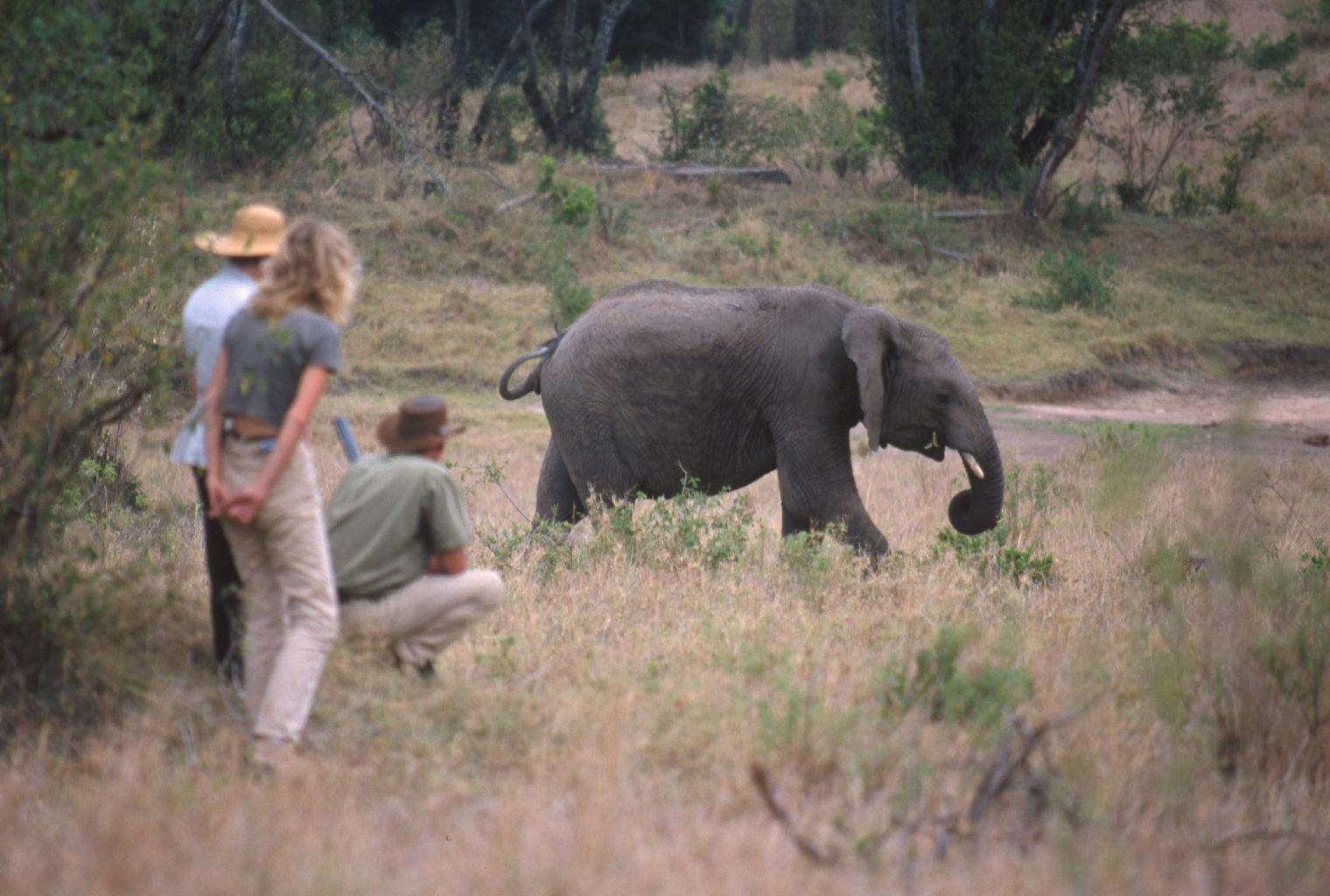 Cottars Private House Kenya- Wildlife