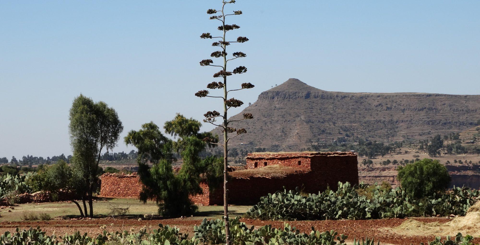 Ethiopia-Korkor-Lodge-Exterior