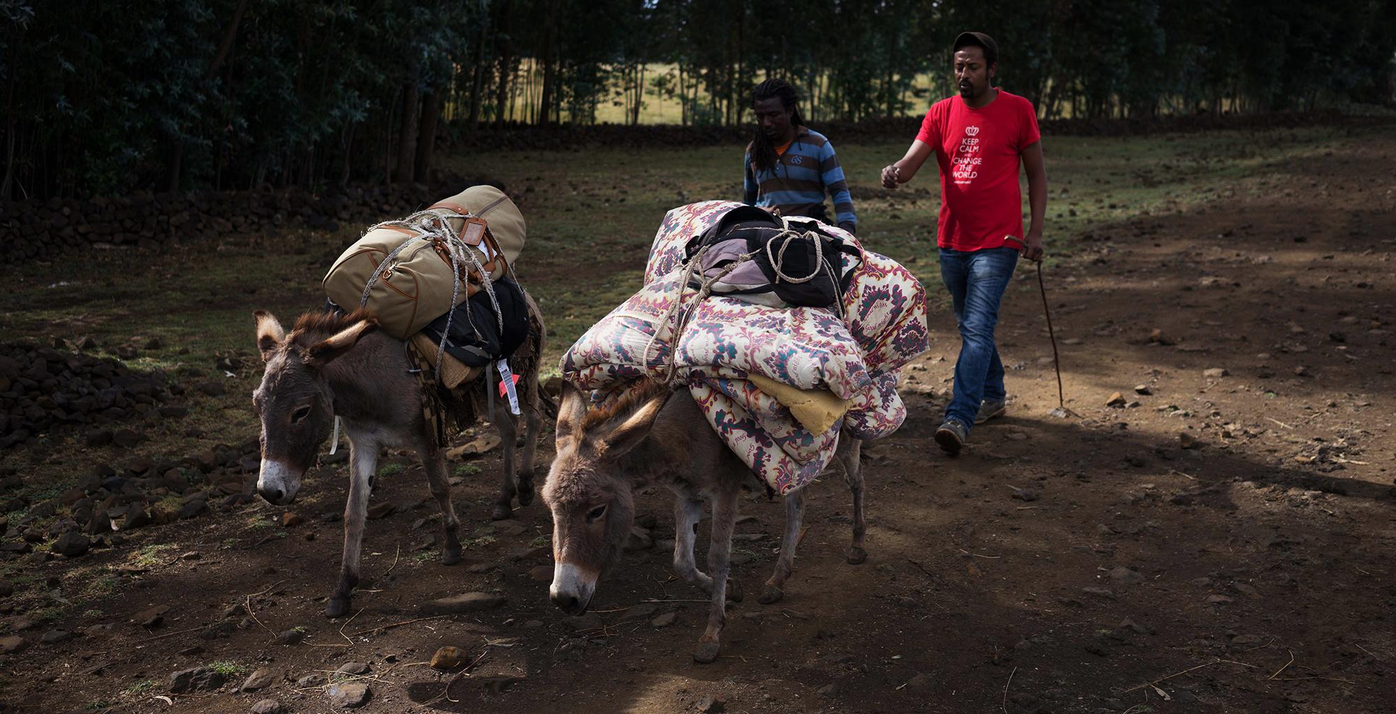 Ethiopia-Tigray-Walk-Donkey