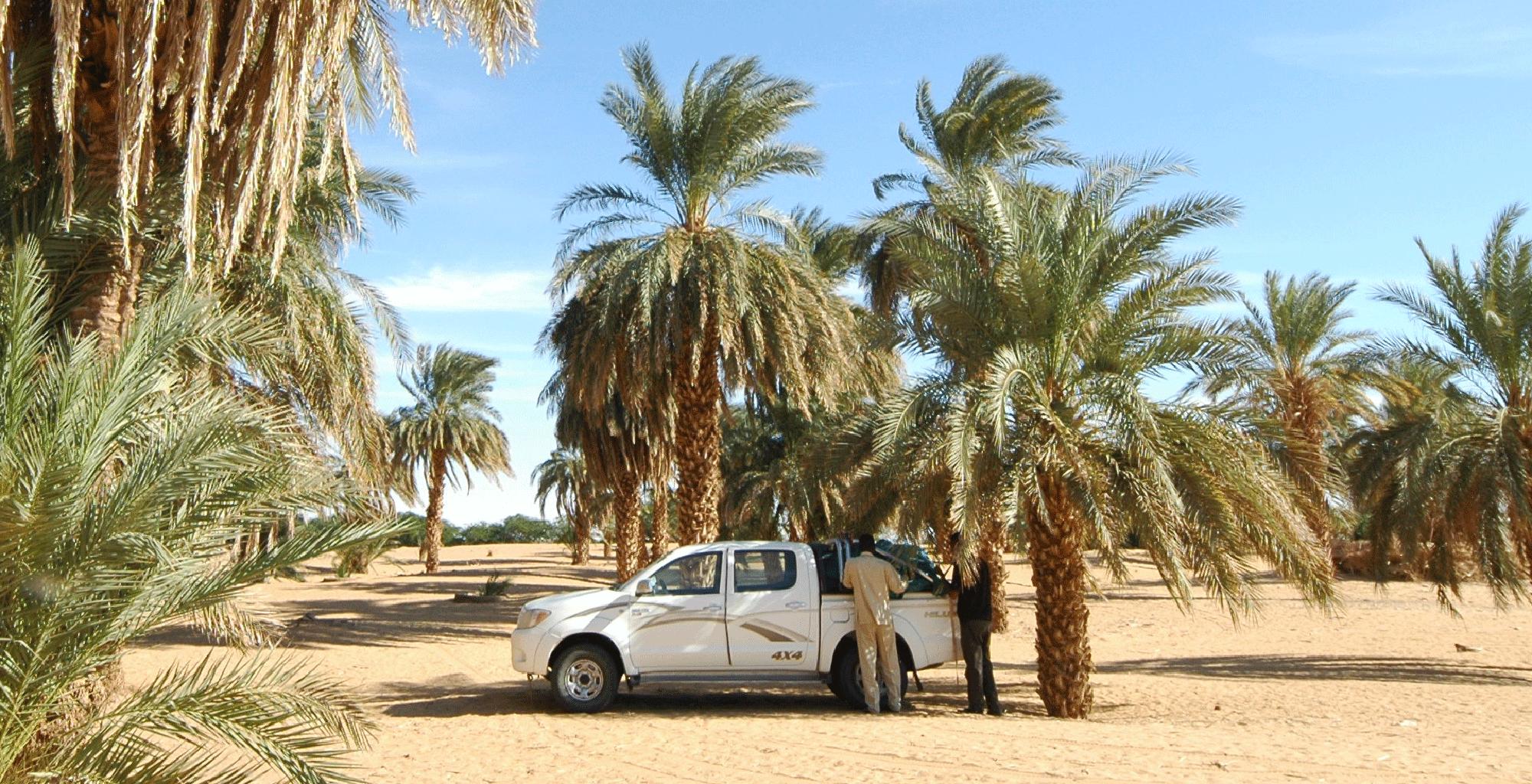 Sudan-Kerma-Wild-Camp-Transport