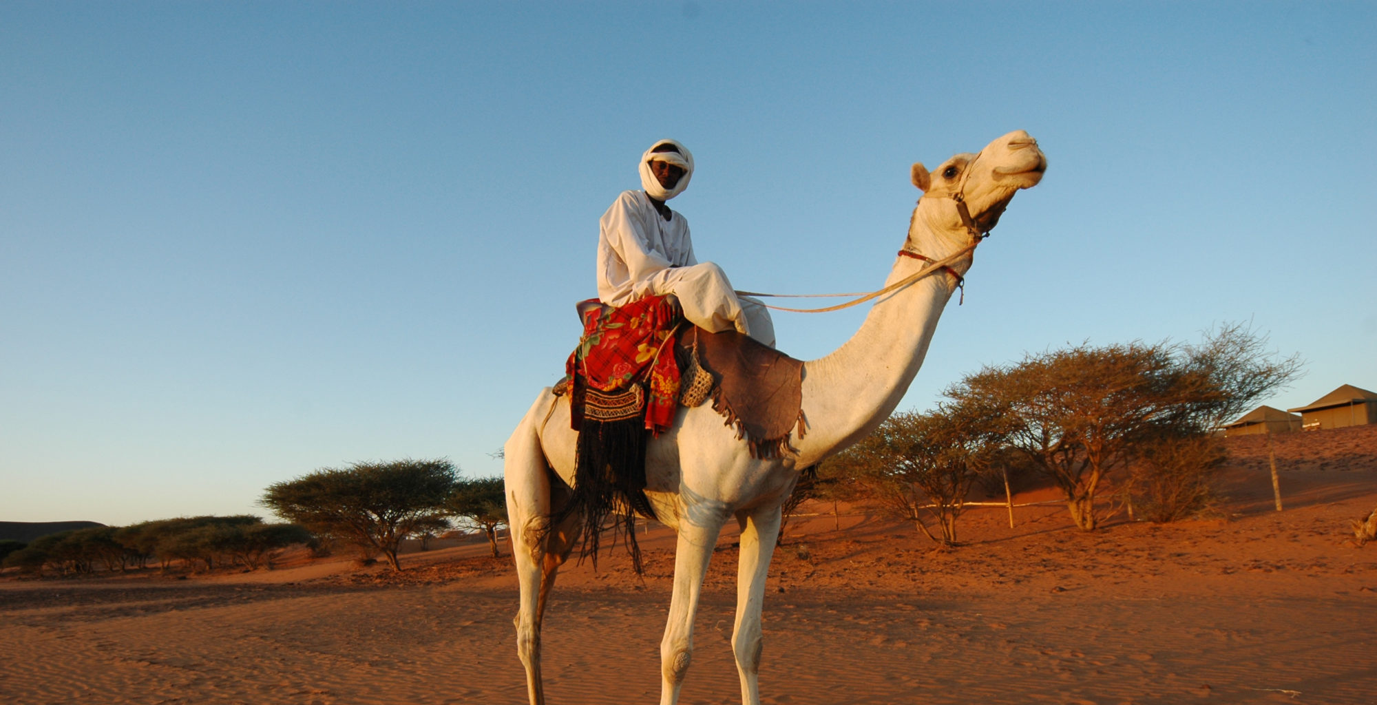 Meroe-Tented-Camp-Sudan-Camel