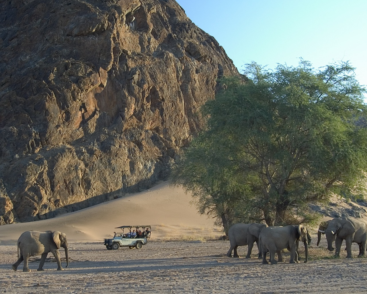 Damaraland Adventurer Camp Namibia Wildlife