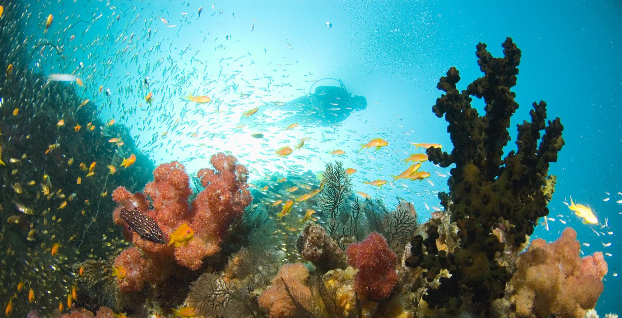 Mozambique-Bazaruto-Archipelago-Underwater-Sealife