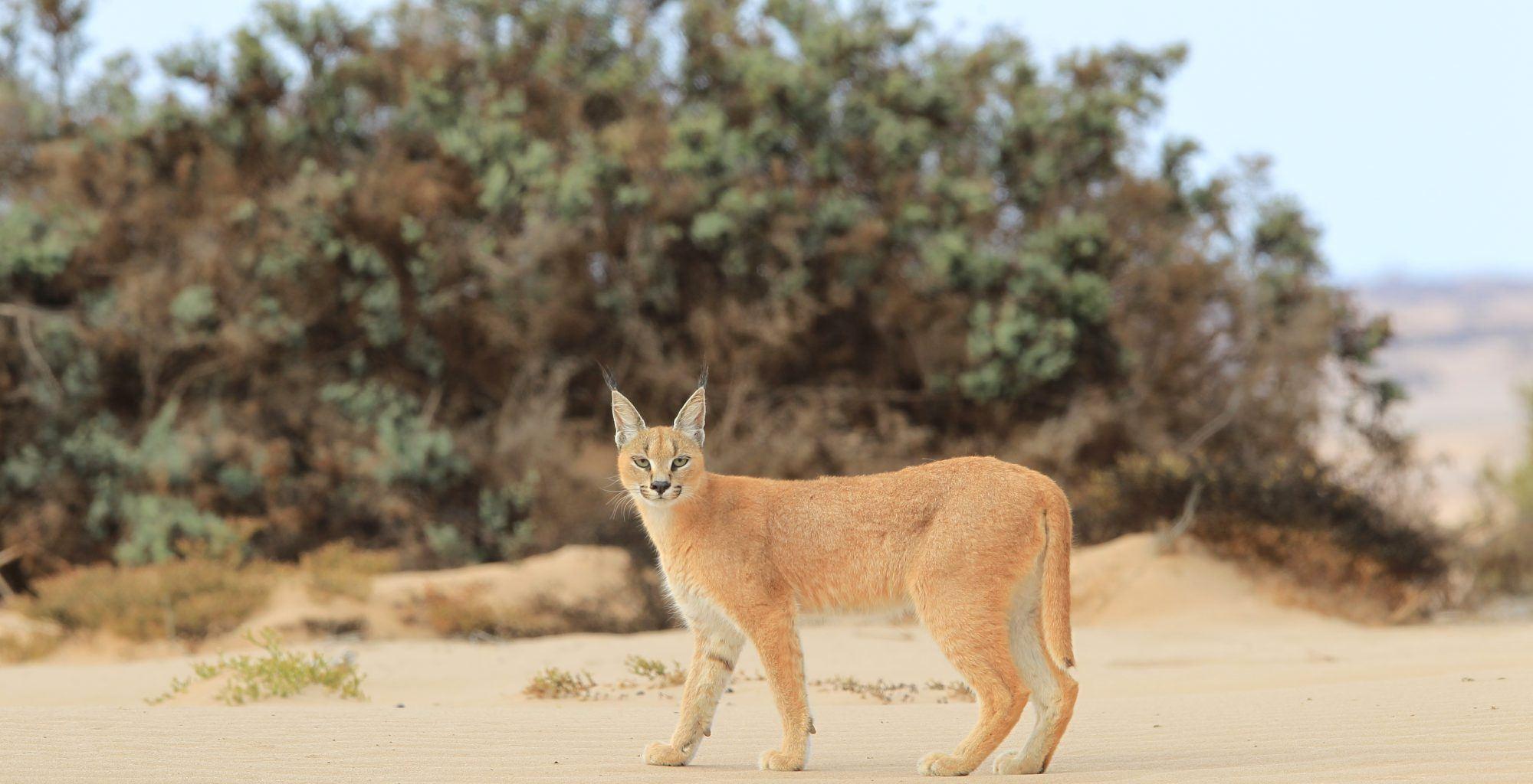 Namibia-Skeleton-Coast-Wildlife