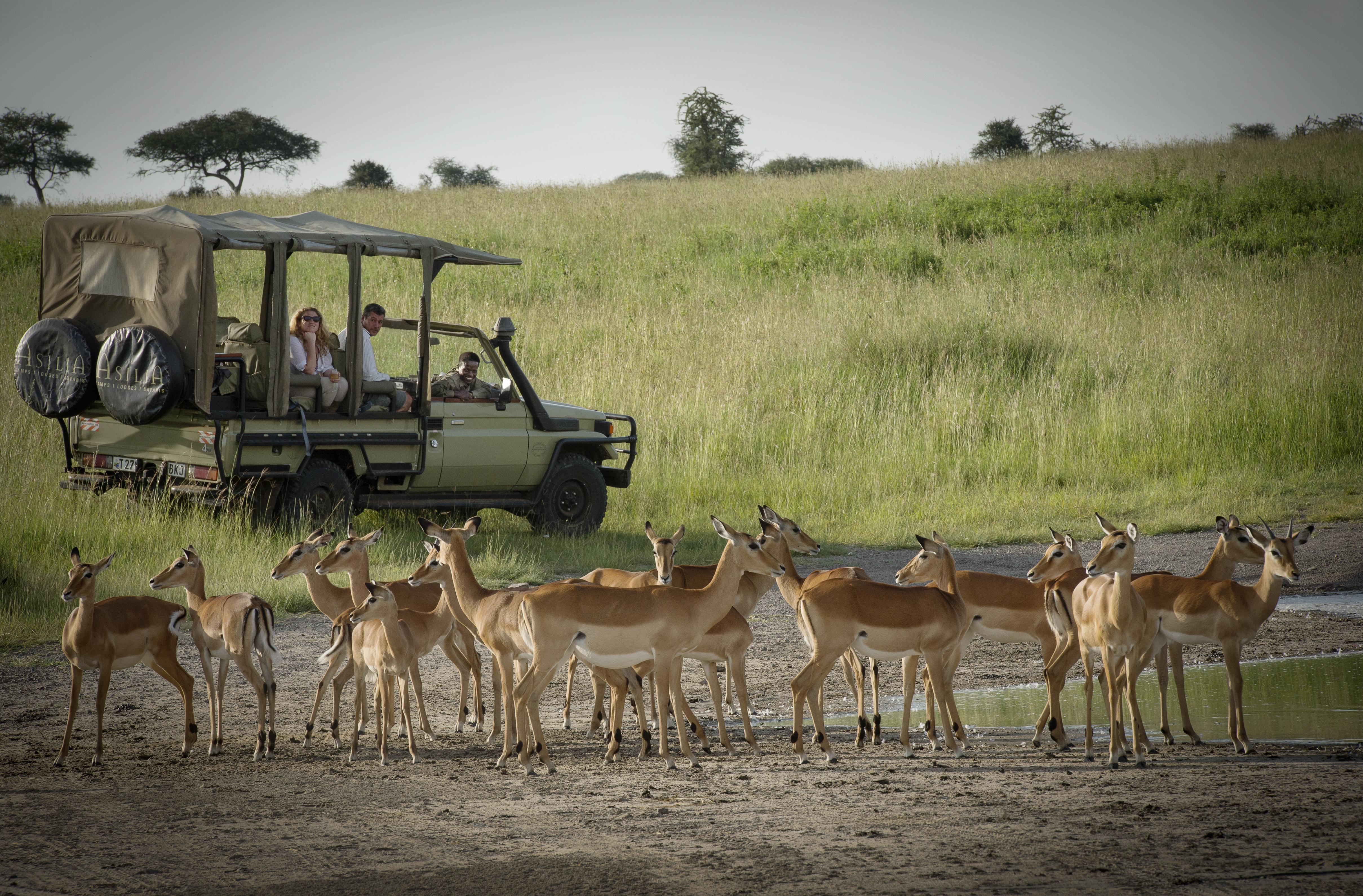 Dunia Camp Tanzania Game