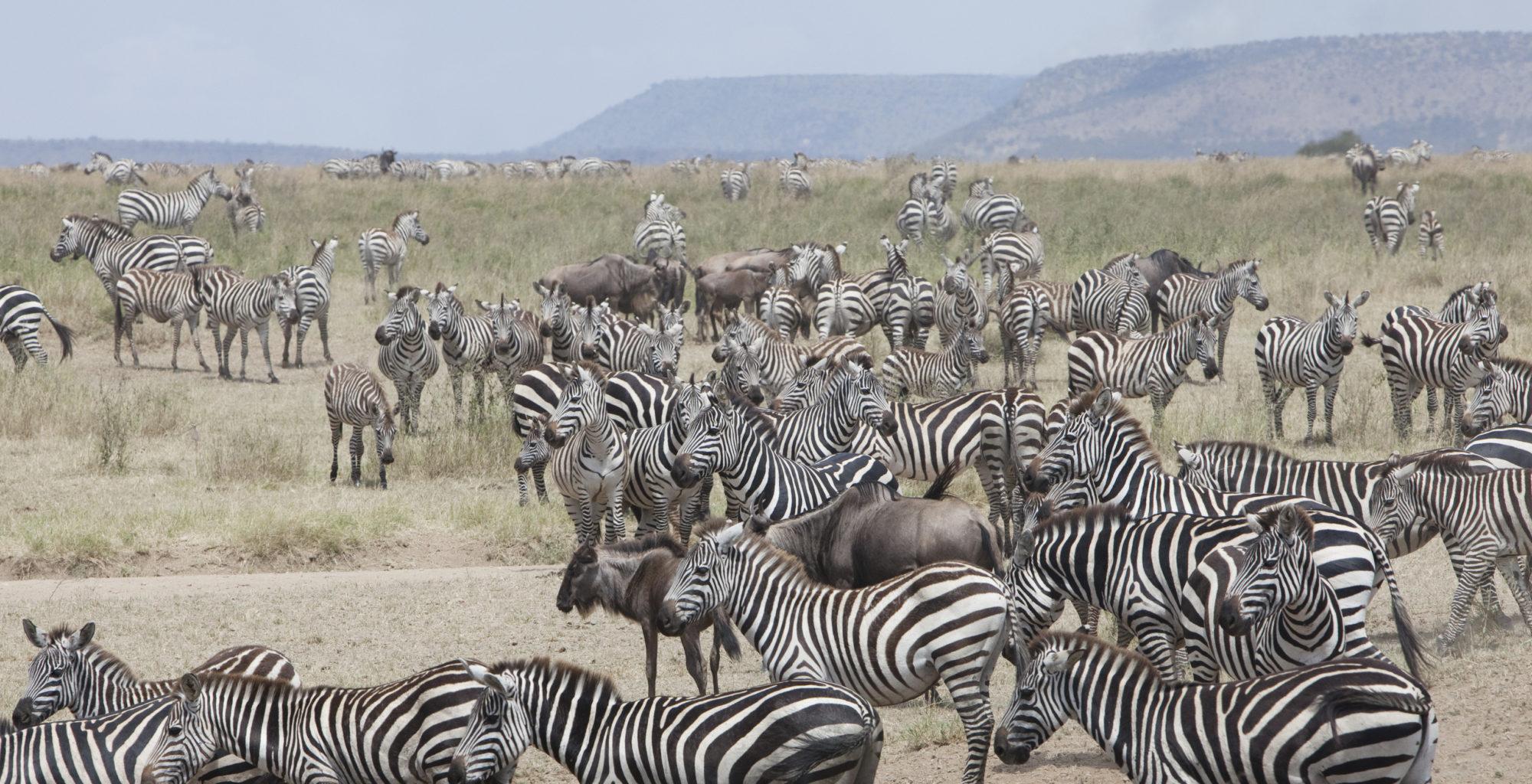 Serengeti National Park Area Images