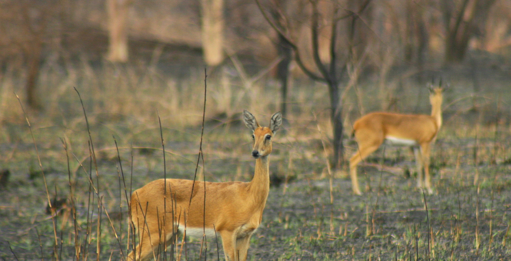 Explore Gorongosa Mozambique Wildlife