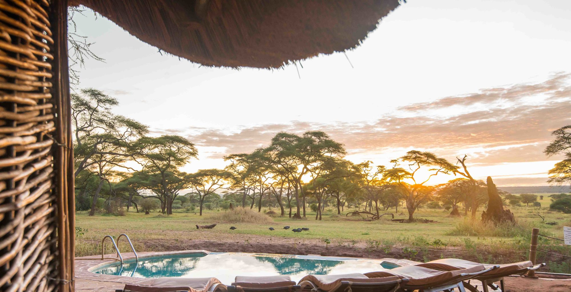 Swala Camp Tanzania Pool