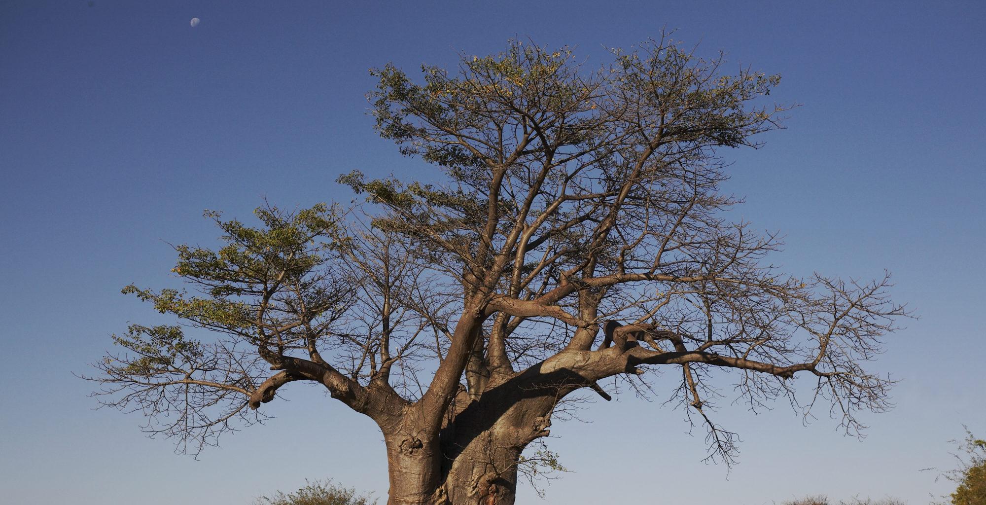 Island-of-Siankaba-Zambia-trees