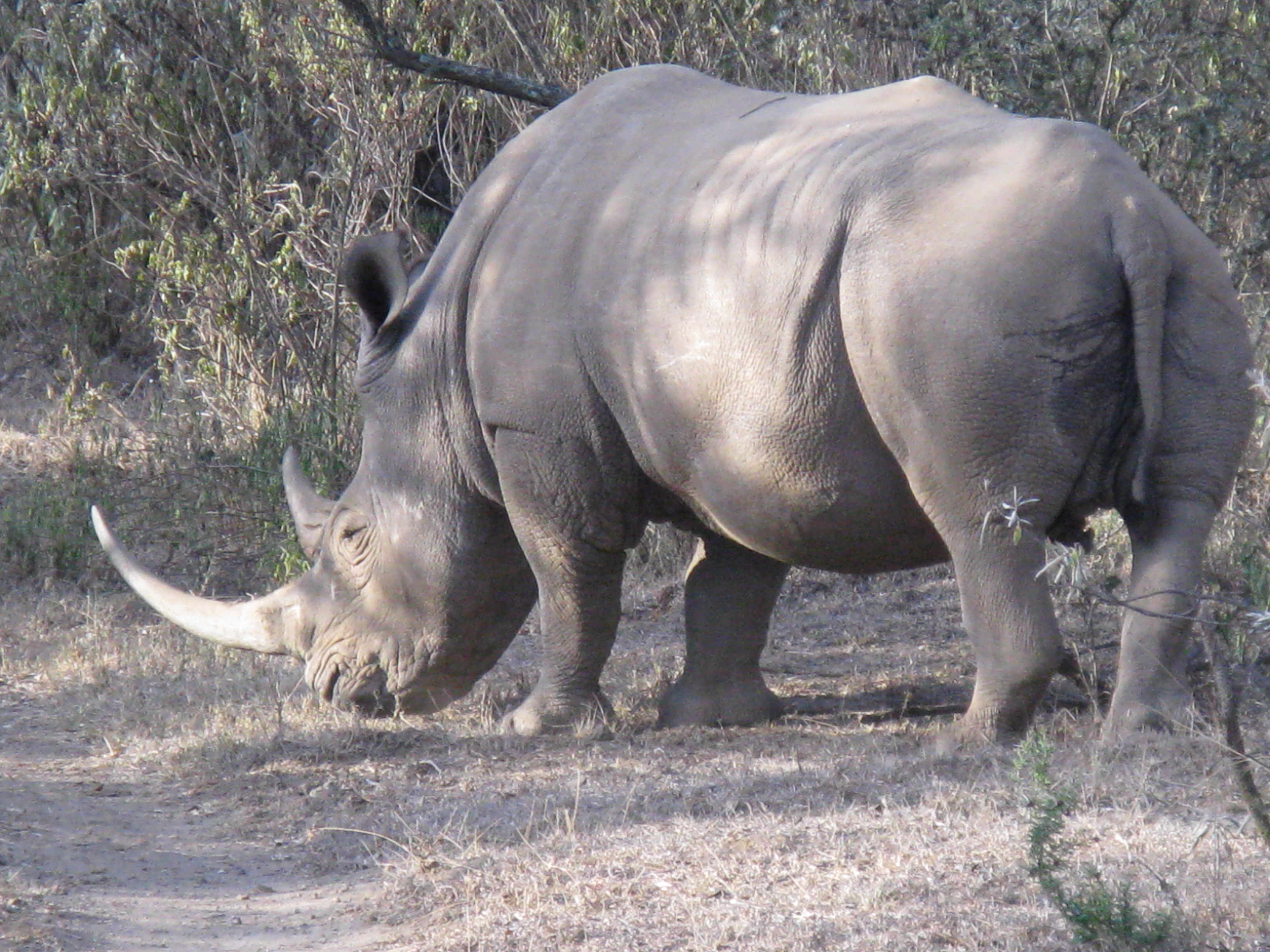 Chui Lodge Kenya Animal