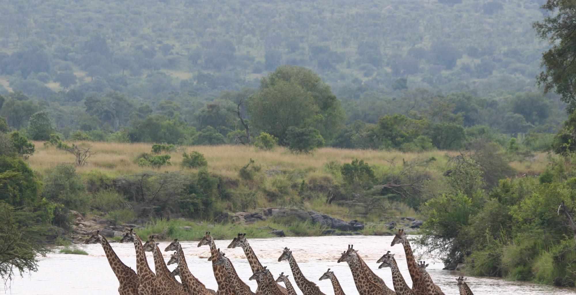 Richards-Camp-Giraffe