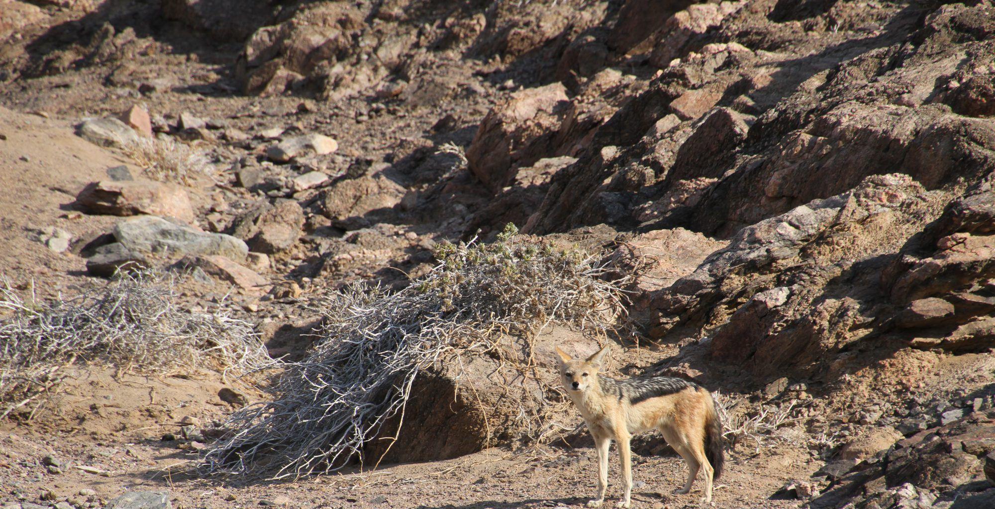 Namibia-Leylandsdrift-Camp-Wildlife